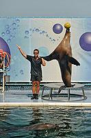 Выступление котика в Утришском дельфинарии