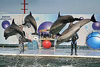Выступление дельфинов в Утришском дельфинарии
